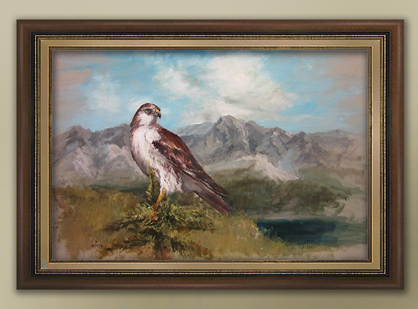 ferruginous-hawk-framed-media.jpg